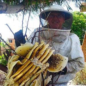 Honeycomb Removal Peoria