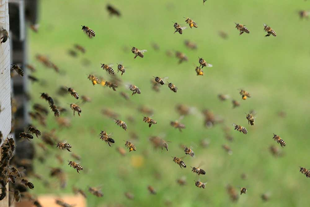 How to Discourage Honey Bees From Nesting in Your Home
