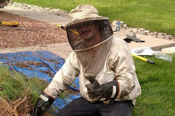 Bee Extermination and Control in Mesa Arizona