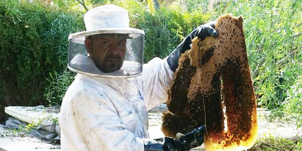 Bee Honeycomb Removal Services