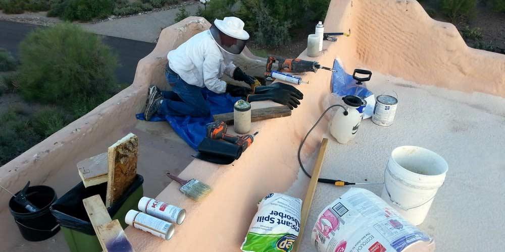 Bee Removal Repairs Arizona