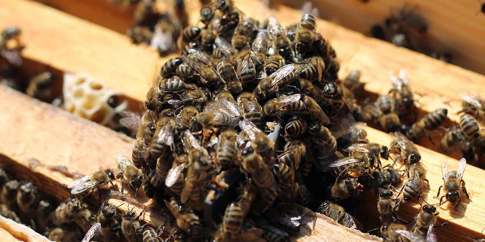 Bee Removal Services Ahwatukee