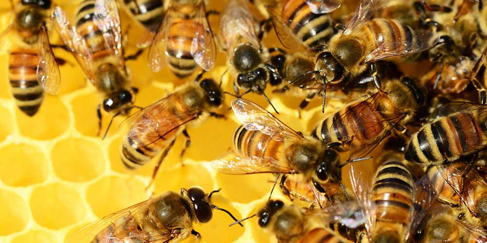 Bee Removal in Apache Junction AZ