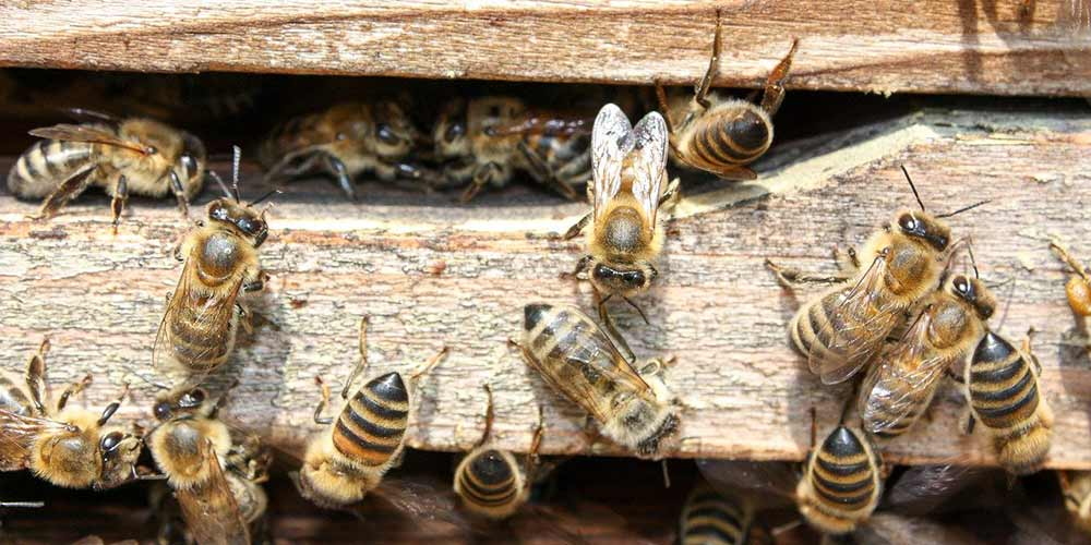 Bee Removal Services Carefree AZ
