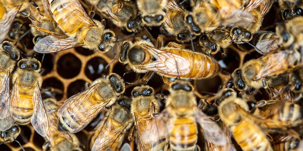 Fountain Hills Bee Removal