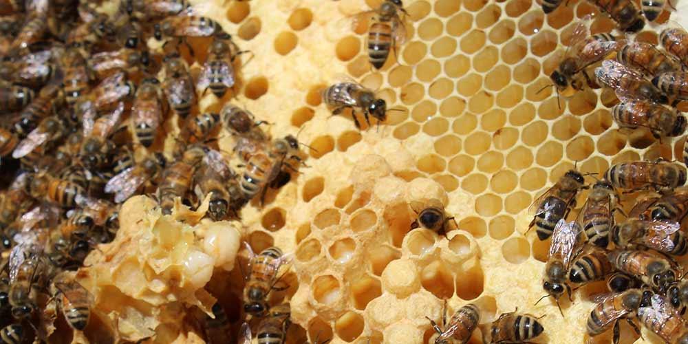 Bee Removal in Glendale AZ