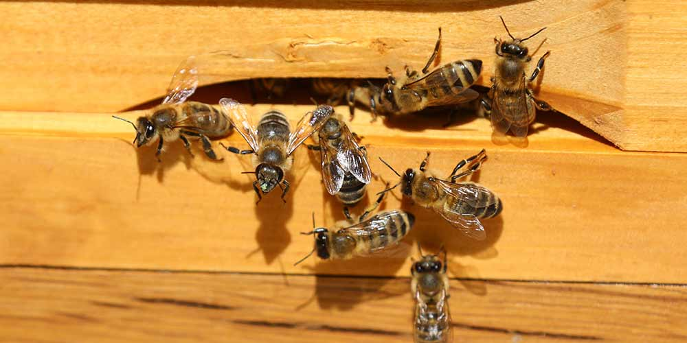 Bee Removal in Litchfield Park AZ