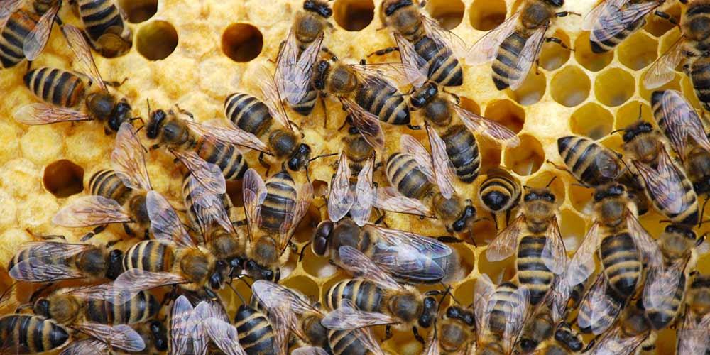 Bee Removal in Mesa AZ