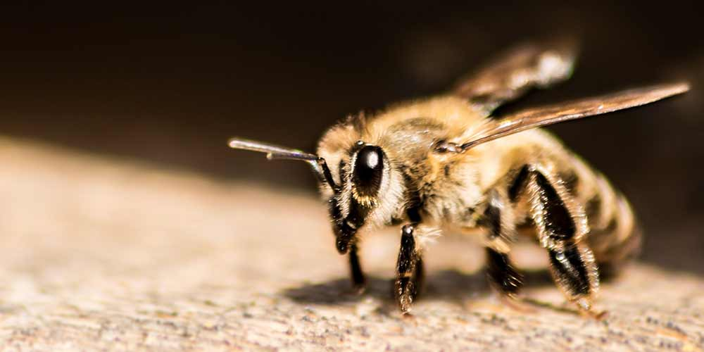 Bee Removal in Paradise Valley AZ