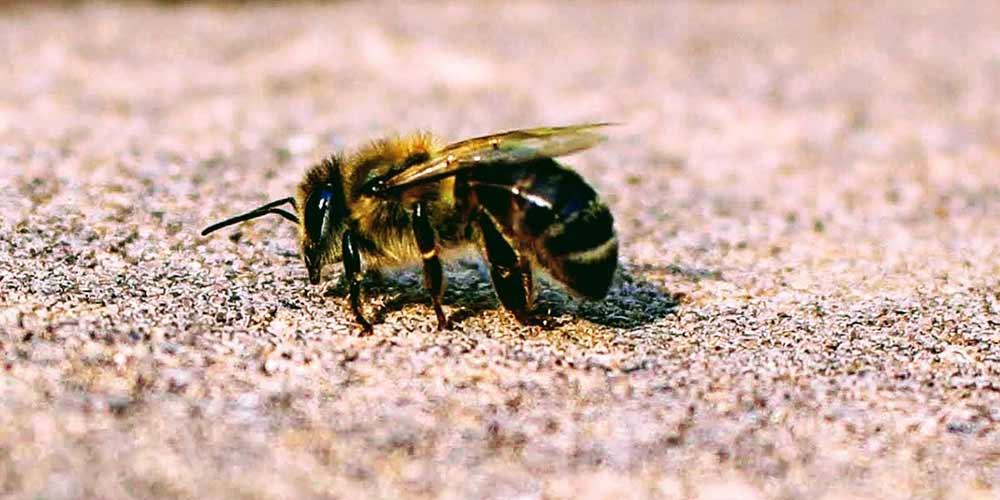 Bee Removal in Queen Creek AZ