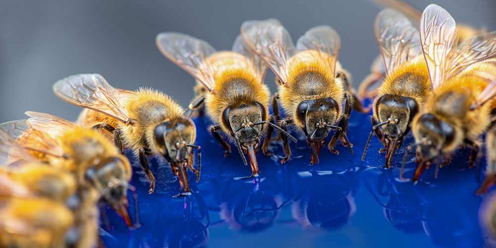 Bee Removal in Rio Verde AZ