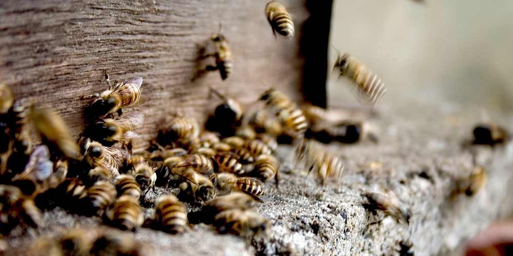 Bee Removal in San Tan Valley AZ
