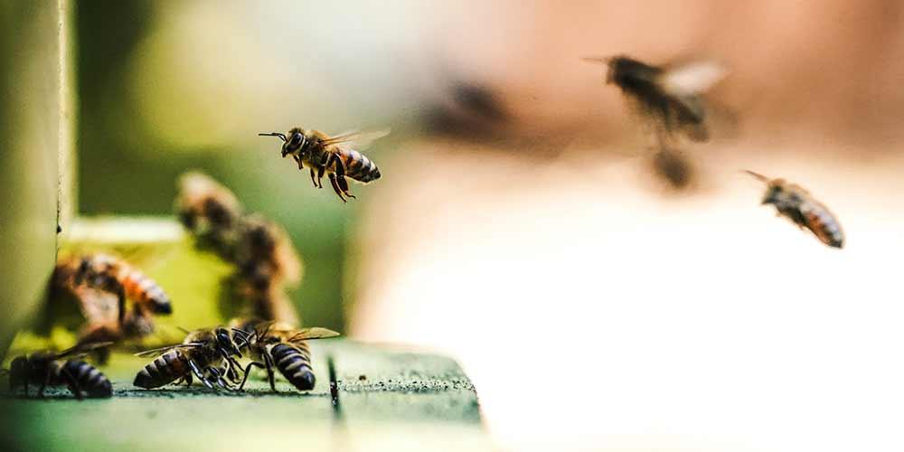 Bee Removal in Scottsdale AZ