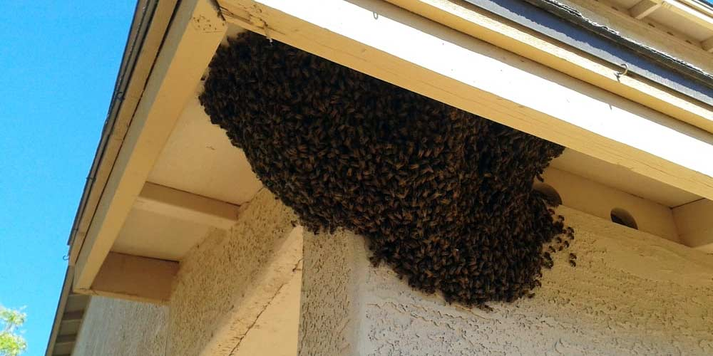 Bee Swarm Removal Services