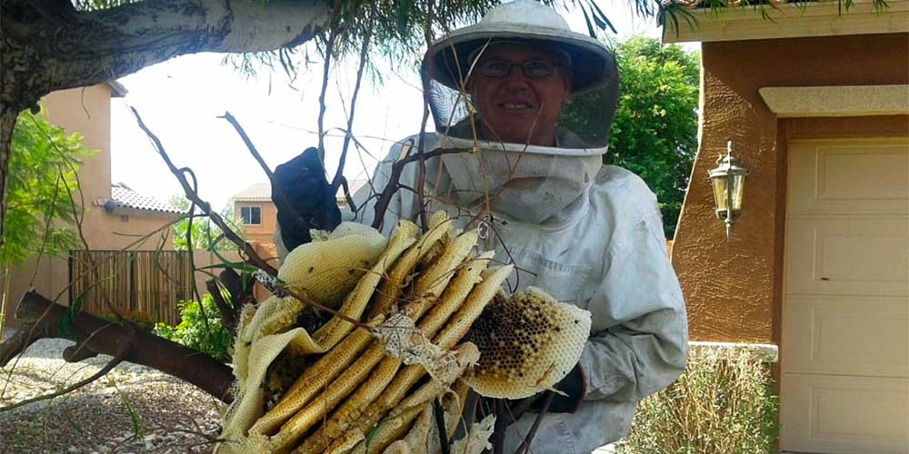 Services Offered by The Beehive Bee and Wasp Removal