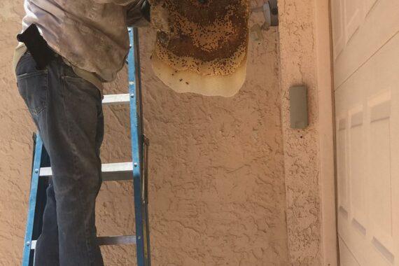 Honeycomb Removal in Mesa Arizona